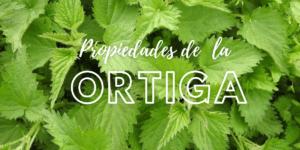 Para que sirve la Ortiga: Beneficios y propiedades